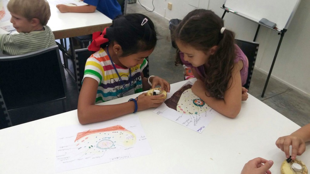 Haciendo un taller de 'PatataCélula'